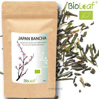 Grüner Tee Japan Bancha - BIO 250 Gramm
