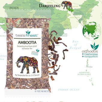 Darjeeling Ambootia GFOP First Flush ca. 4 Gramm