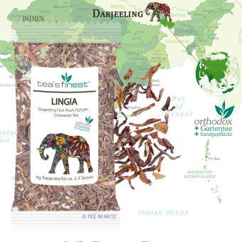 Darjeeling Lingia First Flush TGFOP1 4 Gramm